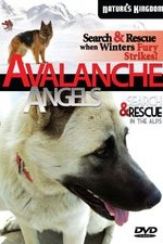 Watch Avalanche Angels