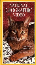 Watch Cats: Caressing the Tiger