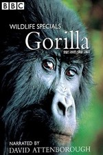Watch Gorilla Revisited with David Attenborough