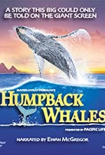 Watch Humpback Whales