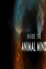 Watch Inside the Animal Mind