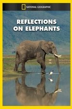 Watch Reflections on Elephants