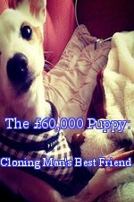 Watch The £60,000 Puppy: Cloning Man's Best Friend