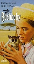 Watch The Bushbaby